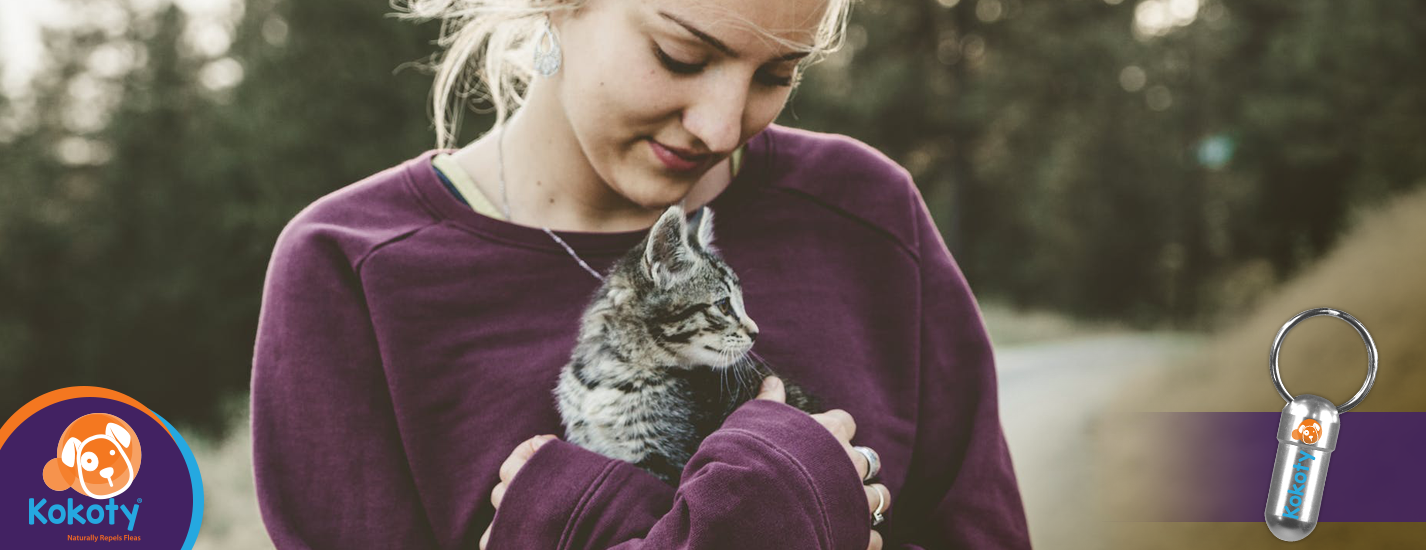 El poder curativo del ronroneo de tu gato
