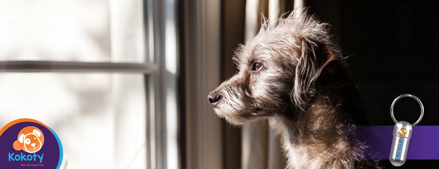 ¿Tu perro te puede olvidar?