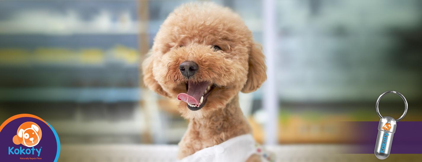 Impulsivo, sociable, intelectual: ¿cuál es la personalidad de tu perro?
