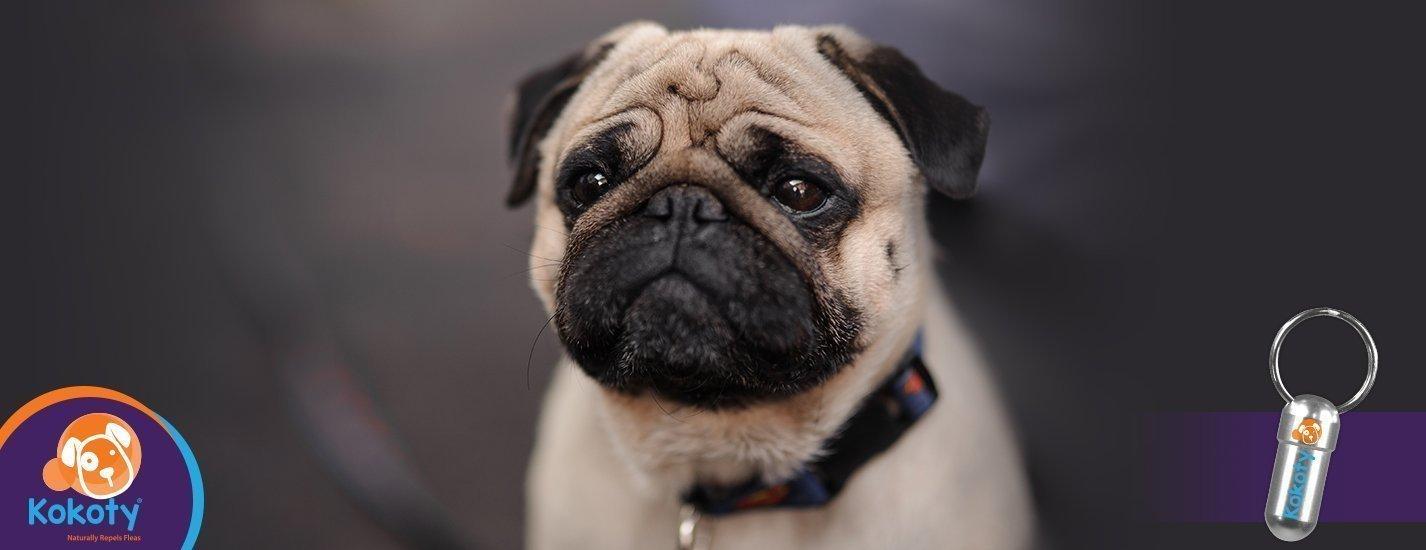 La mirada irresistible de los perros, ¿cómo lo hacen?