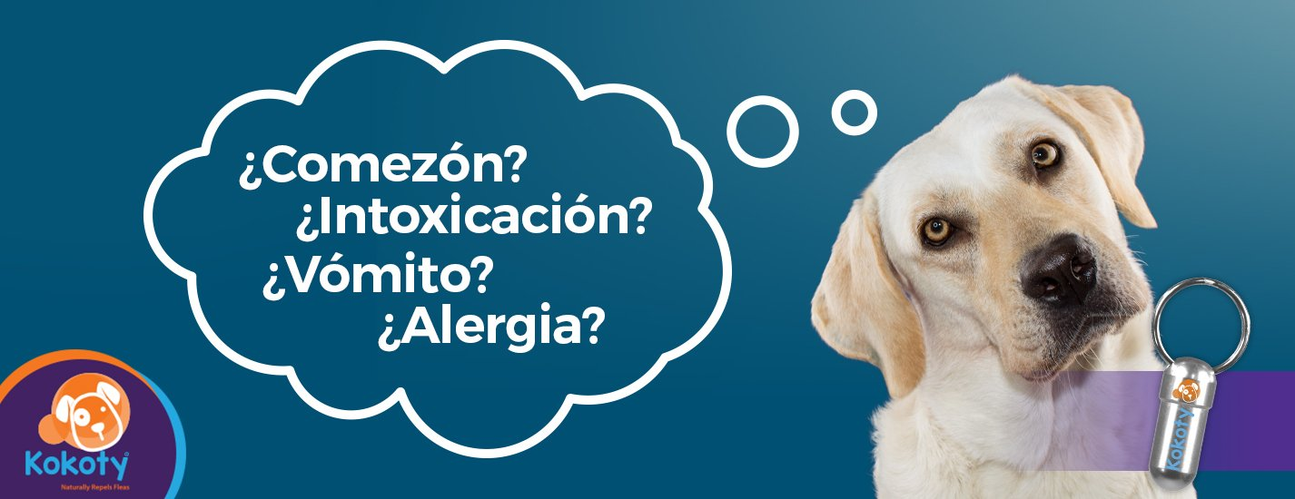 What flea products exist? Which option is more convenient for my pet?