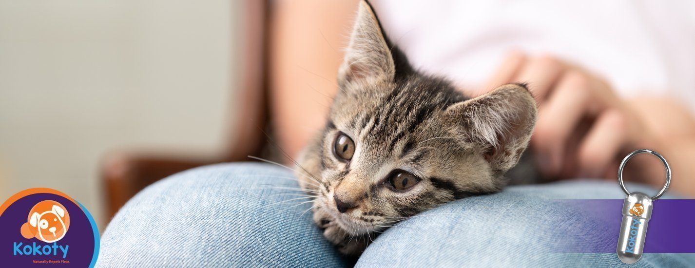 Cat therapy! Steps to have an anti-stress time at home