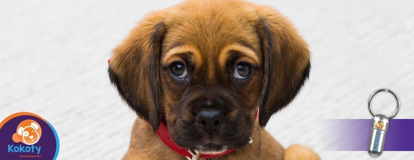 Guía para aprender el lenguaje de tu perro. ¿Qué te está diciendo?