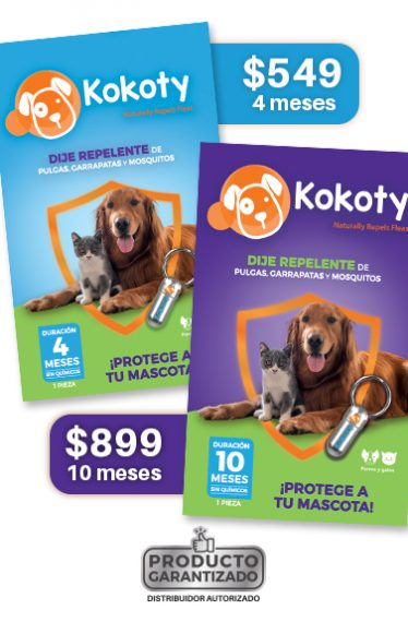 kokoty-highlights-garantizado