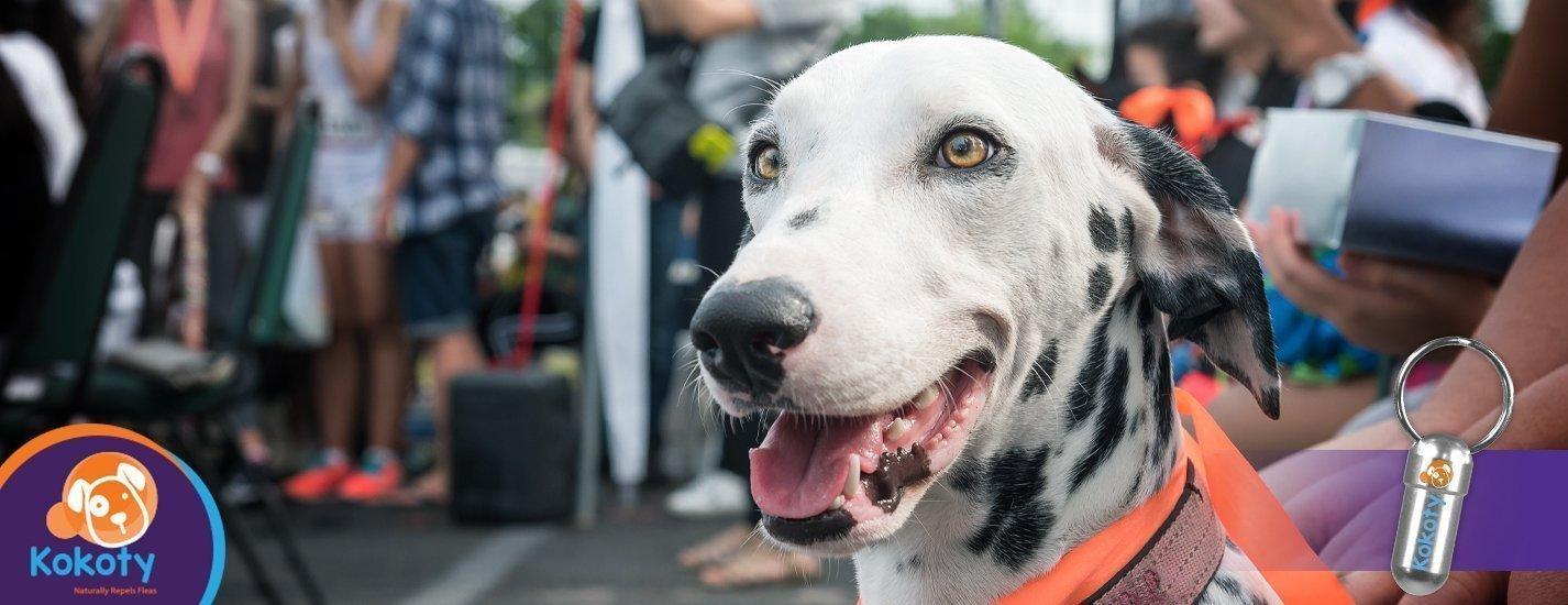 ¿Una expo dedicada a las mascotas?
